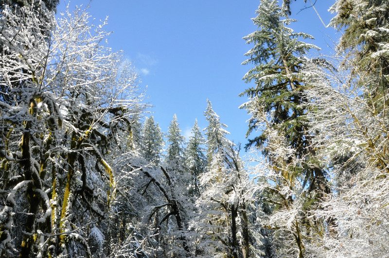 Silver Falls Snow 20 @ Mt. Hope Chronicles