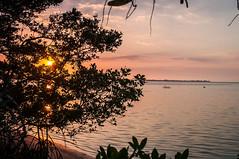 Sunset Through the Bush - Robinson Preserve