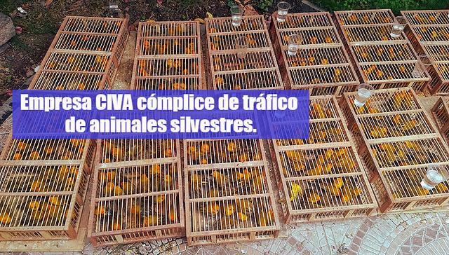 Aves encontradas en la cabina del chofer del bus de la empresa CIVA.
