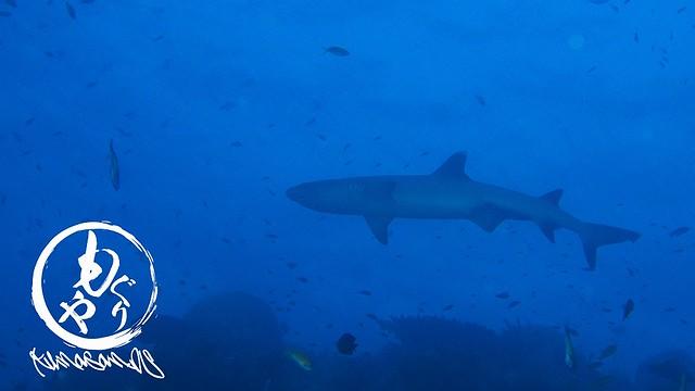 やっぱりサメのフォルムはカッコイイ♪