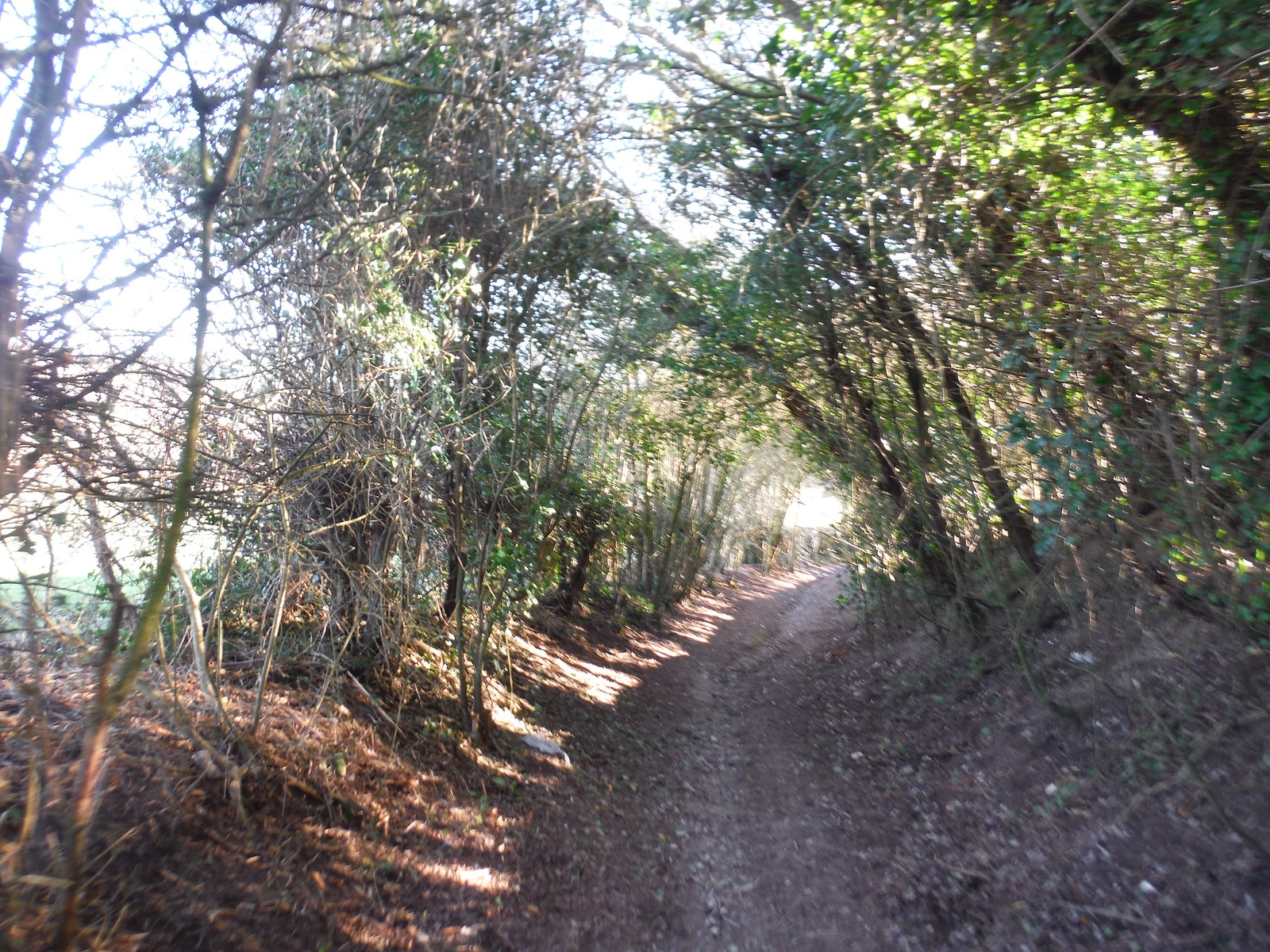 Enclosed Path in Poverty Bottom SWC Walk 181 - Lewes to Seaford via West Firle