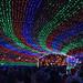 Trail of Lights 002 - Dec 21 2017