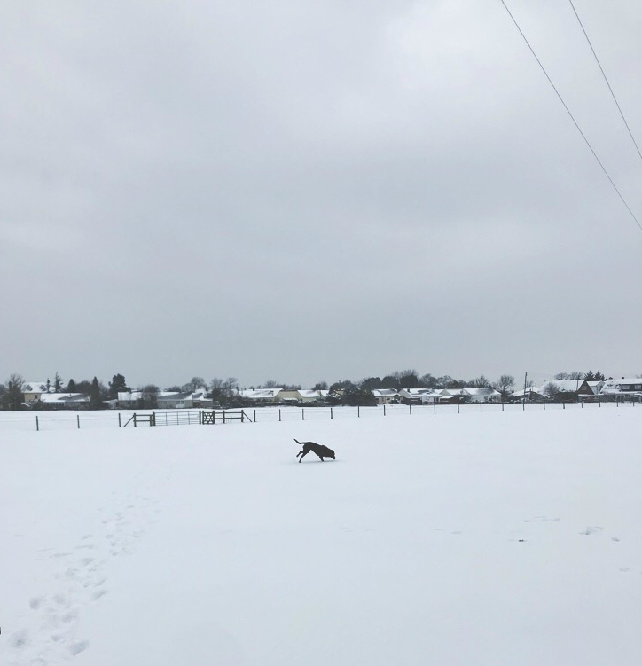 snow day in somerset