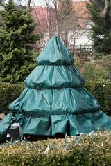 Tree Wears Puffy Coat