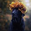 puppy01_mika