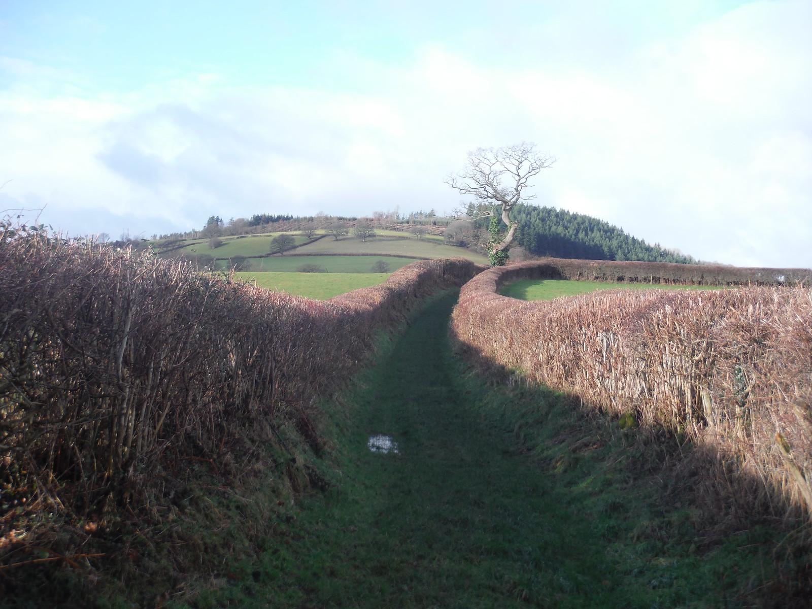 Towards Coed Fenni-fach, an Iron Age hill fort site SWC Walk 306 - Brecon Circular (via Y Gaer, Battle and Pen-y-crug)