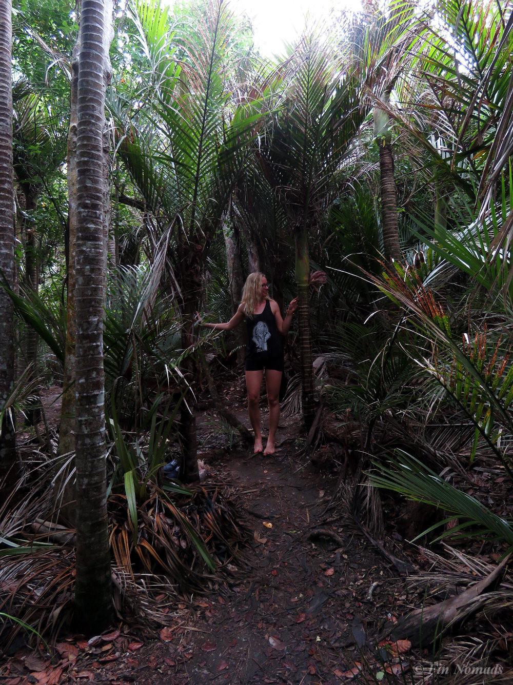 Jungle Northland
