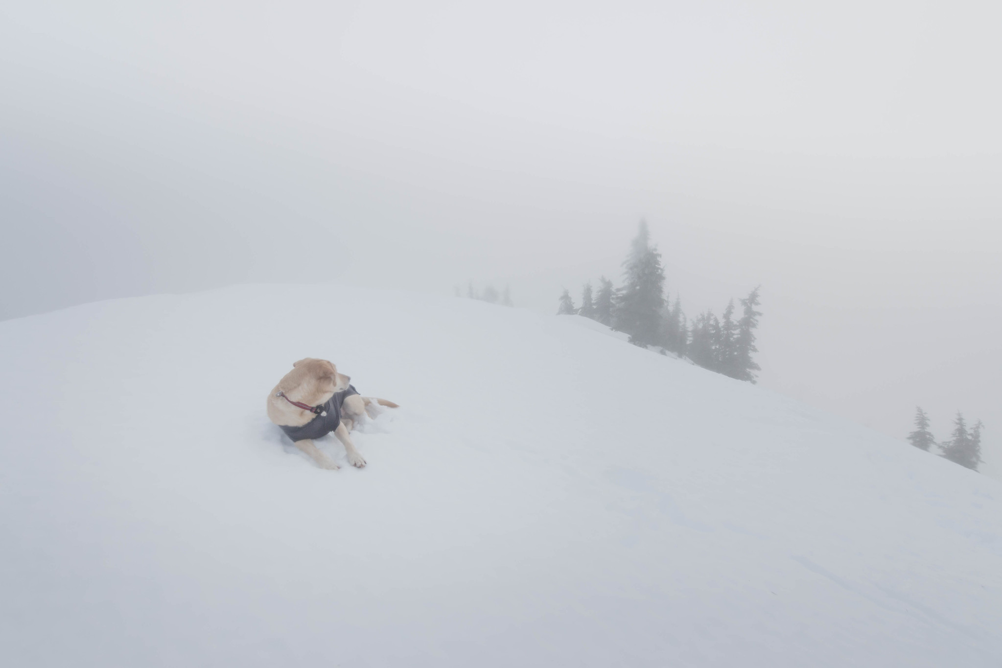 Summit dogs on Little Kachess Peak