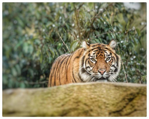 Chester Zoo 18/01/18