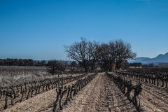 vignes, variations - Photo of Trets