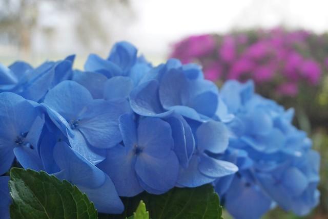 Macro bloom - Happy weekend everyone 🌺🌸🌷