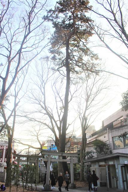 jiyugaokakumano-gosyuin01029