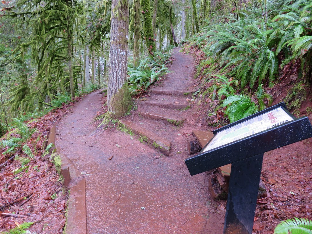 Old Growth Trail junction with the New Growth Trail