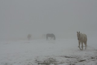 2018-2-15. Horses in the Mist