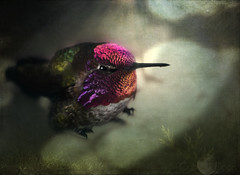 the hummingbird mishap (please read)