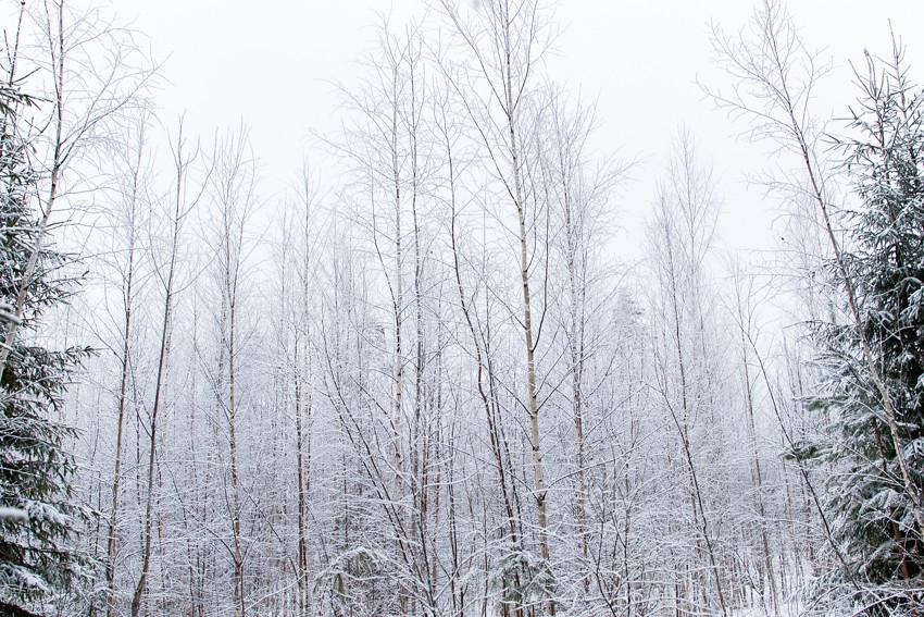 talvinen suo-2680