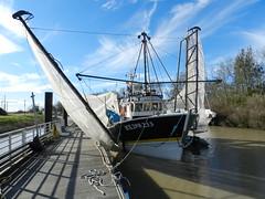 Le port de la Maréchale - Photo of Saint-Christoly-Médoc