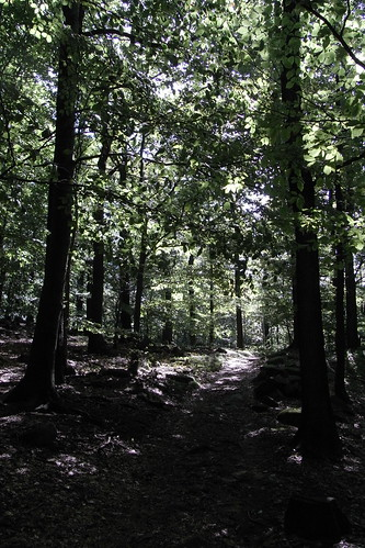 20100821 112 0101 Jakobus Weg Wald Bäume