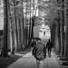 The corridor of trees