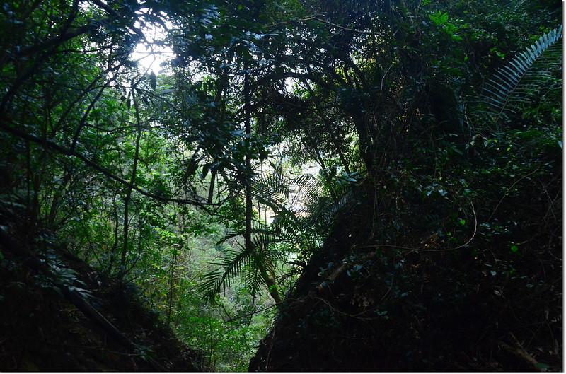 芒果坑山攻頂前山溝大斷崖