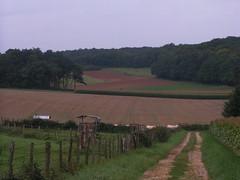 20070903 13038 0710 Jakobus Feld Wald Wiese Weg Hügel Zaun Kühe
