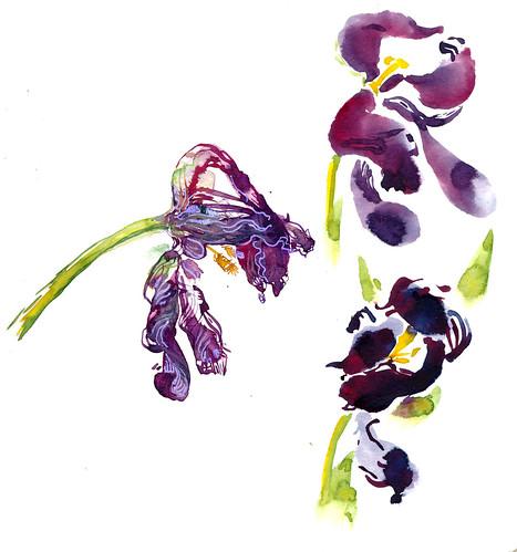 Sketchbook #111: Tulips
