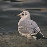 2018:01:14 17:05:58 - Einbein - bird bokeh
