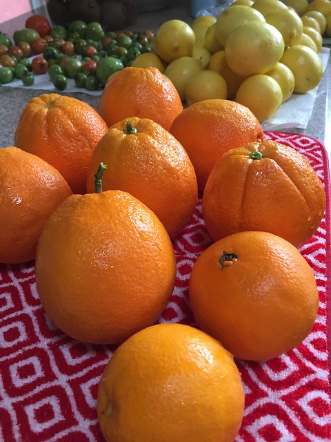 Oranges, Lemons, and Tomatoes, oh my!
