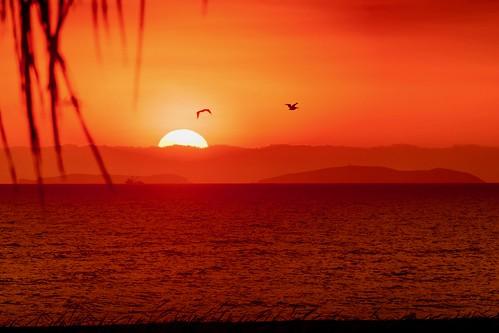 peru soleil disparaît derrière lhorizon soleildisparaîtderrièrelhorizon sun sunset perou pérou amériquelatine amériquedusud pacific oceanpacific ocean rouge orange jaune oiseaux palmier montagnes bateau nuages pyc5pycphotography pyc5pyc pycassaut couchers de spectaculaires sur le pacifique couchersdesoleilspectaculairessurlepacifique pisco borddemer seaside plage beach pyc assaut coucher spectaculaire iles îles island islands pelican