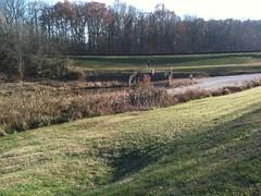 Valley Park Pond Pre-Retrofit (10)