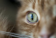 """Image by please follow me on insta """"windsofgreen"""" (smulgubbe) and image name Close enough; a cat portrait photo"""