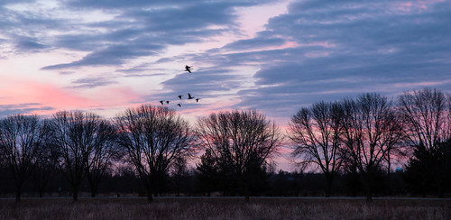 pentax2470f28edsdm cy365 sunset plants geese birds time baretrees goose evening 040318 weather trees 3652018 365the2018edition pentax march day63365 cloud photography 365challenge clouds animals equipment camera pentaxlenses nature marion iowa unitedstates us
