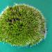 Crazy world of macro moss