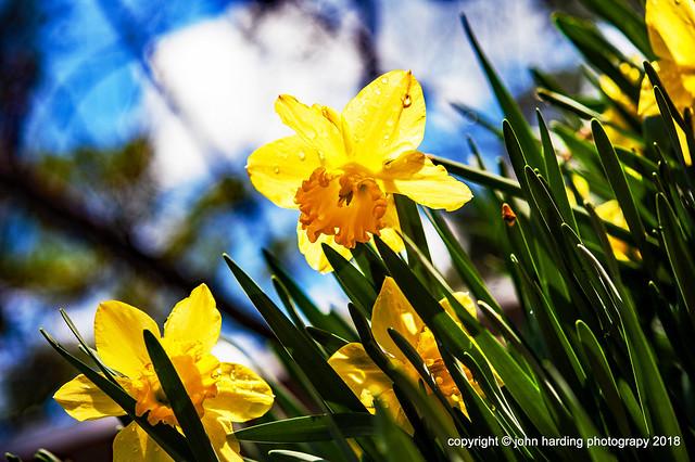 Spring Redeux