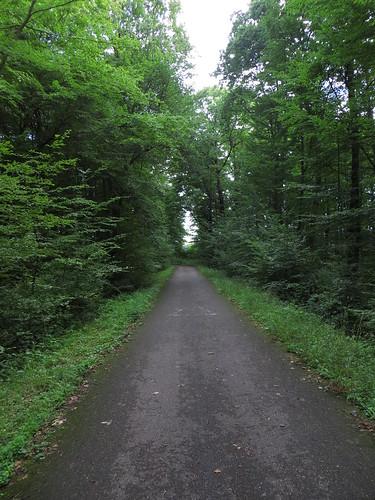 20140804 02 094 Jakobus Wald Weg