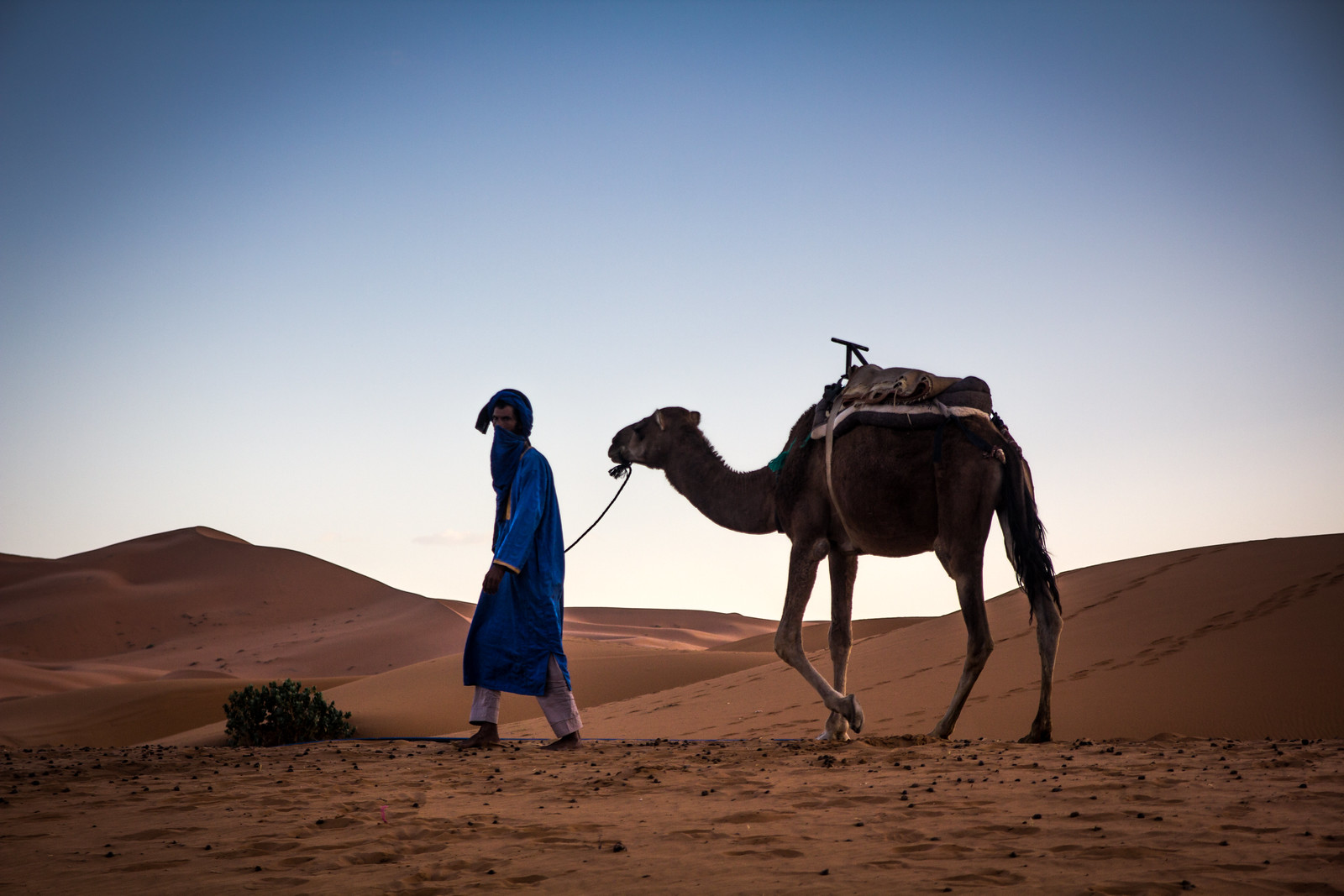 Camel in Silhouette