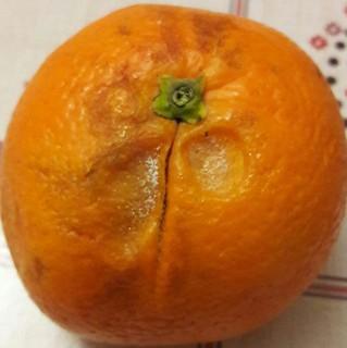 arancia marcia mensa Turi