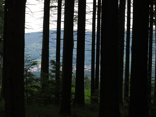 20170605 07 187 Regia Hügel StangenWald Bäume