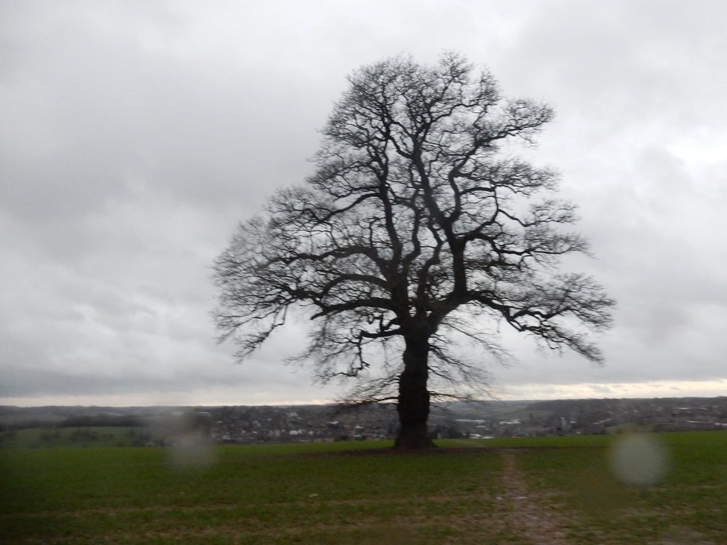 Tree overlooking Chesham Chorleywood to Chesham