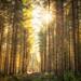 Fernworthy Forest by Rich Walker75