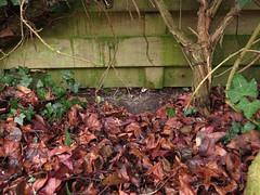 De passage onder de schutting tussen de tuin van de achterburen en die van ons.
