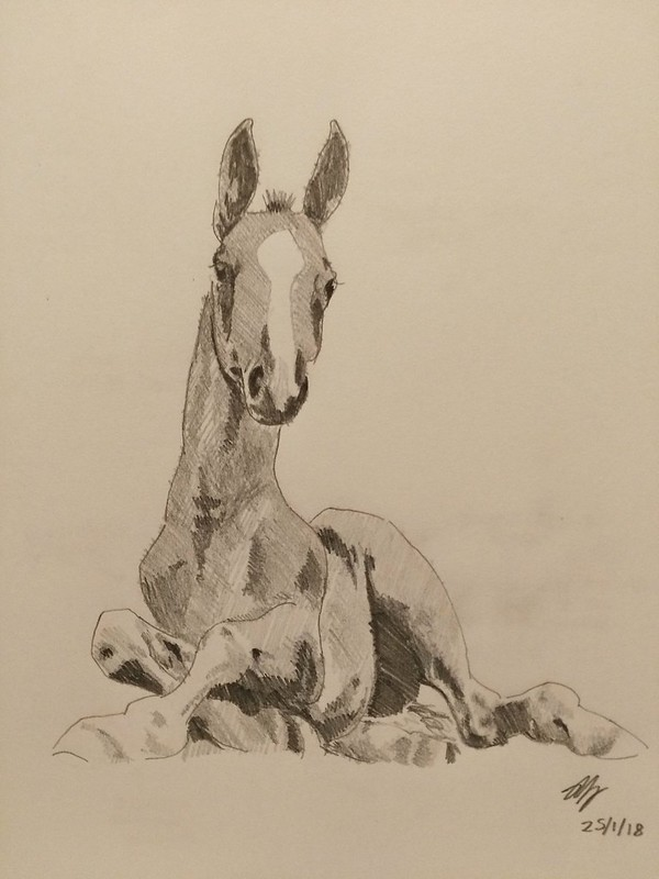 Study of a foal - pencil, value study
