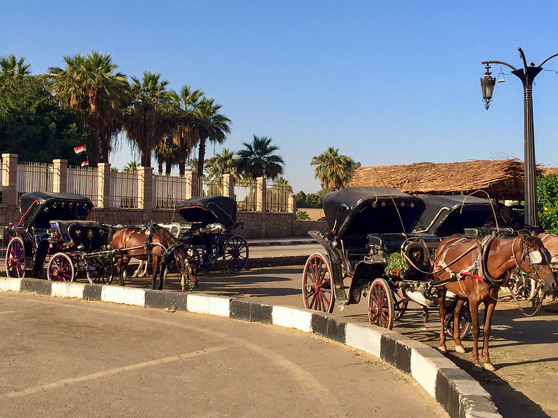 Horse carriages in Luxor
