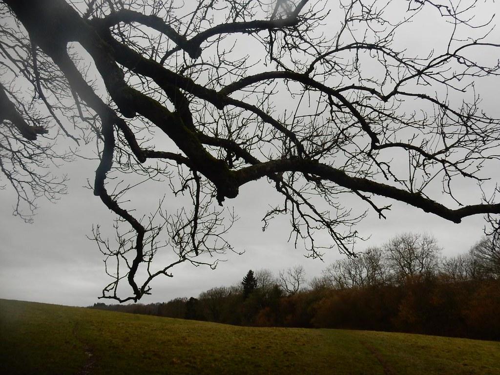 Branch Wadhurst circular