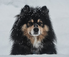 On Valentines Day, how could I not have a photo of my beloved 4 legged friend.
