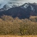 Skiddaw Fells above Wythop Woods