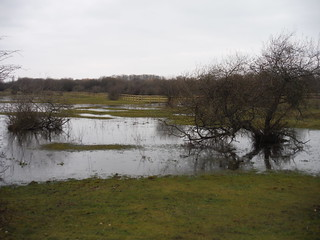 Crowfoot Marsh, The Chase Local Nature Reserve