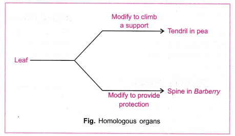cbse-class-10-science-practical-skills-homology-and-analogy-of-plants-and-animals-1