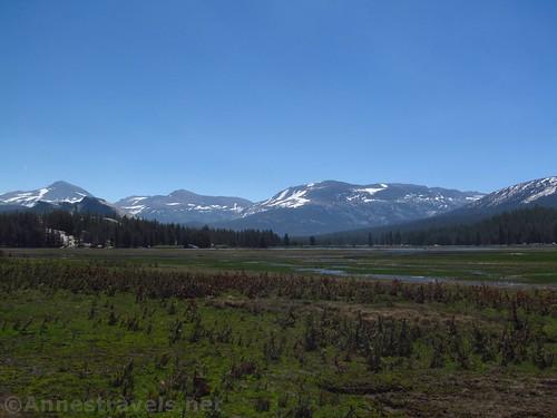 Views across Tuolumne Meadows to Mt. Dana, Lembert Dome, Mt. Gibbs, and Mammoth Mountain in Yosemite National Park, California