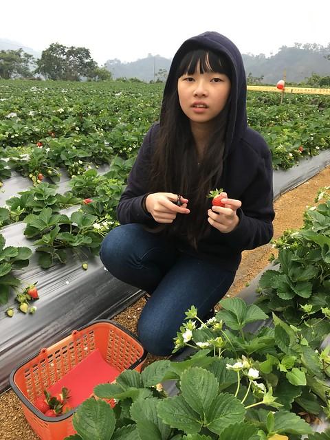 名品草莓園
